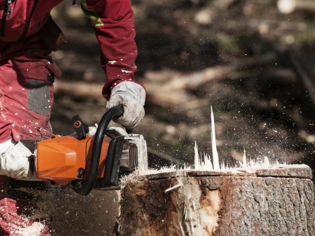 Say goodbye to tree stumps and hello to a beautiful landscape